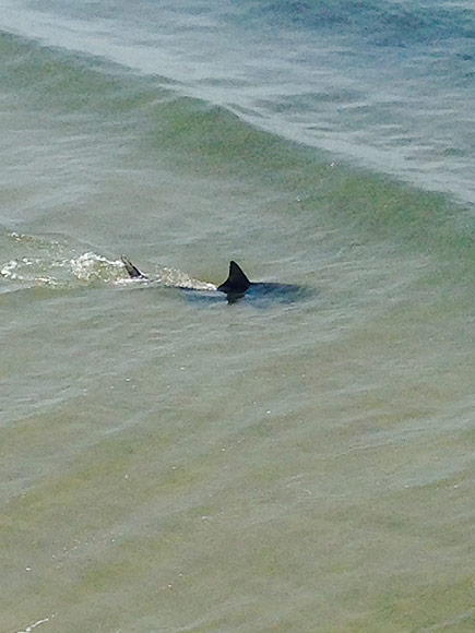 North Carolina Shark Attack 67 Year Old Man People Com