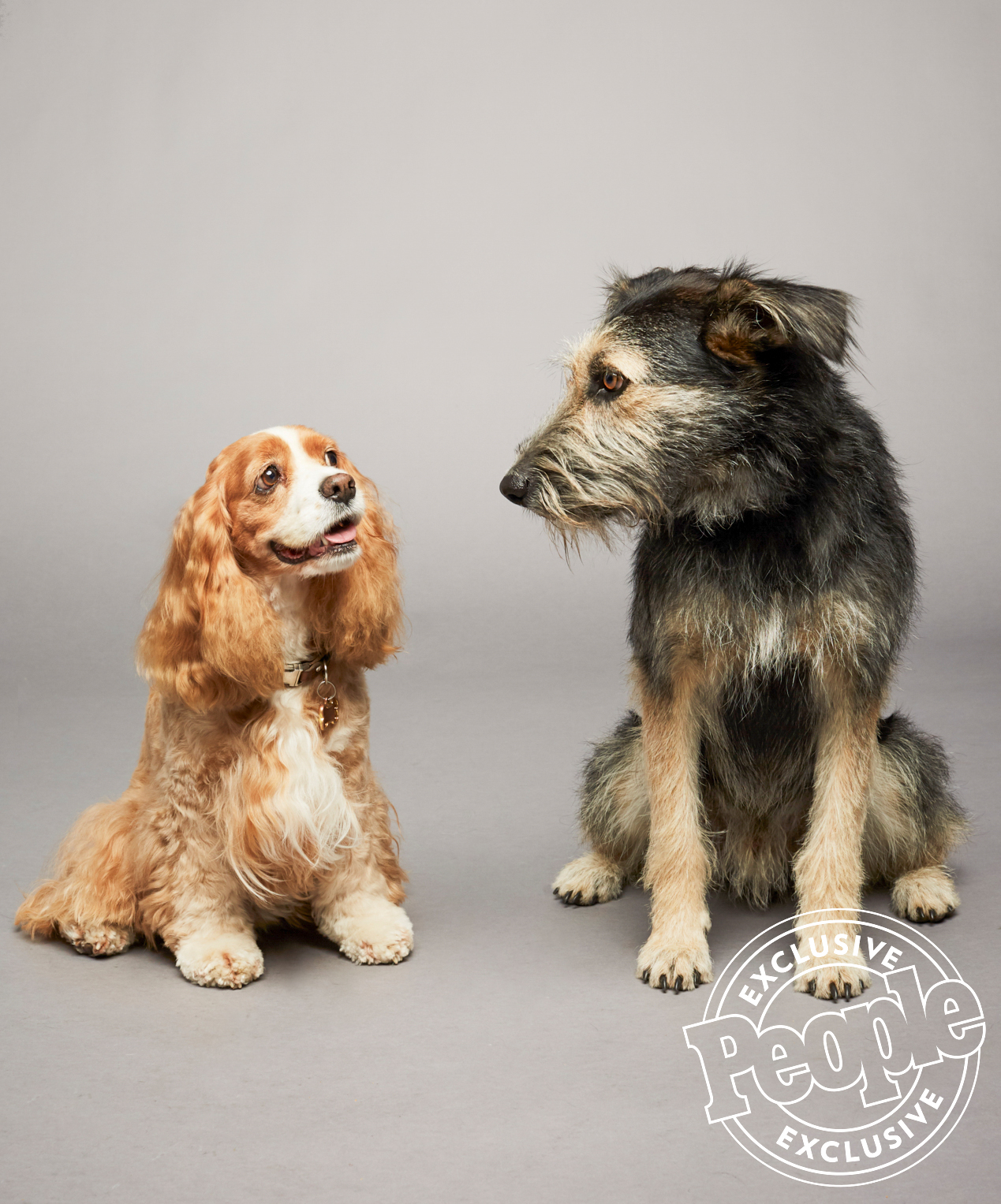 Lady And The Tramp Disney Remake Puppy Clip People Com