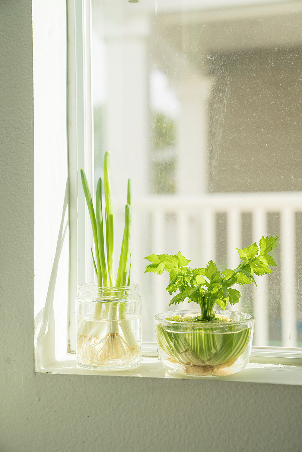 How To Grow Produce From Your Windowsill People Com