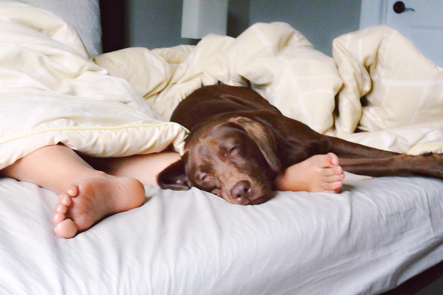 Nearly 75% of Dog Owners Let Pets Sleep on Bed | PEOPLE.com