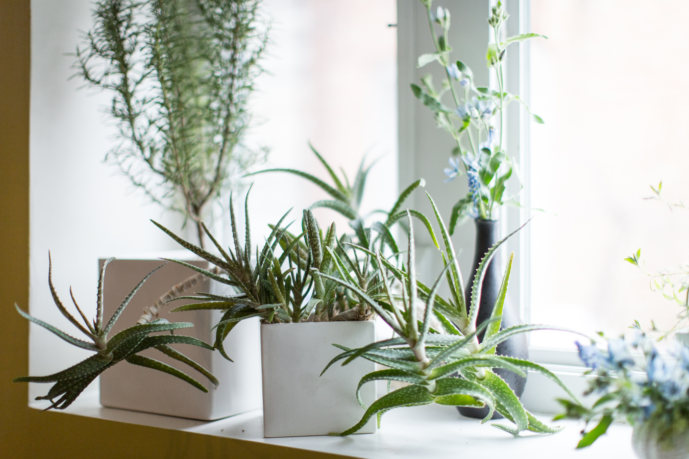 16 Low Maintenance Indoor Houseplants Most Likely To Survive All Year Long Real Simple