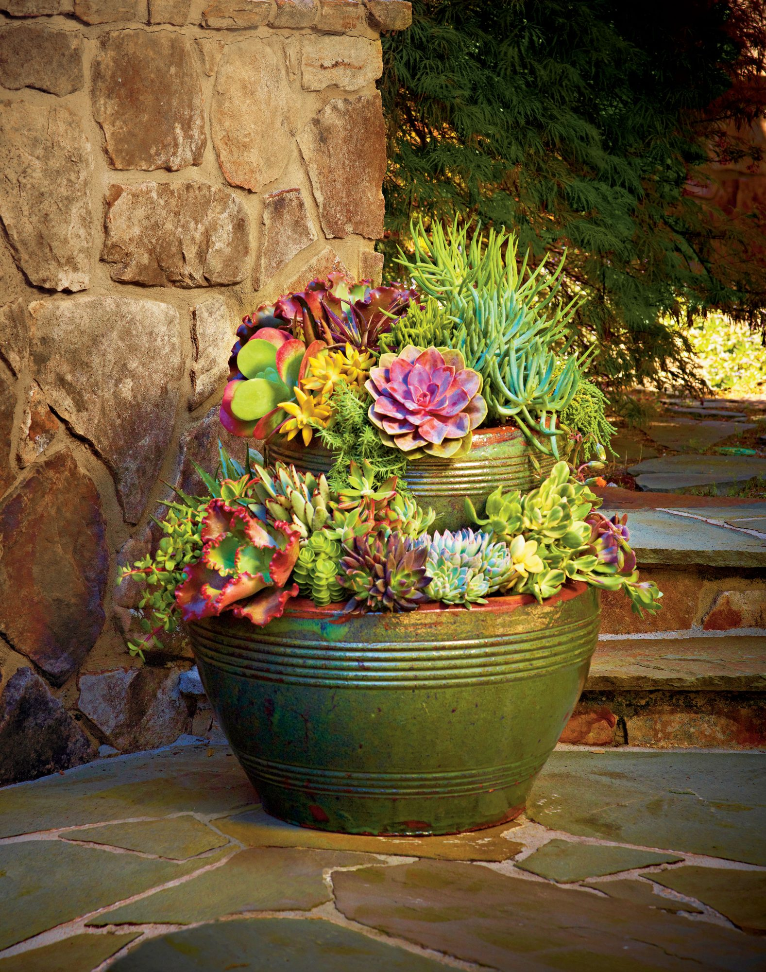 Succulent Container Gardens That Still Look Good Even If It S Pushing Triple Digits Out There Southern Living