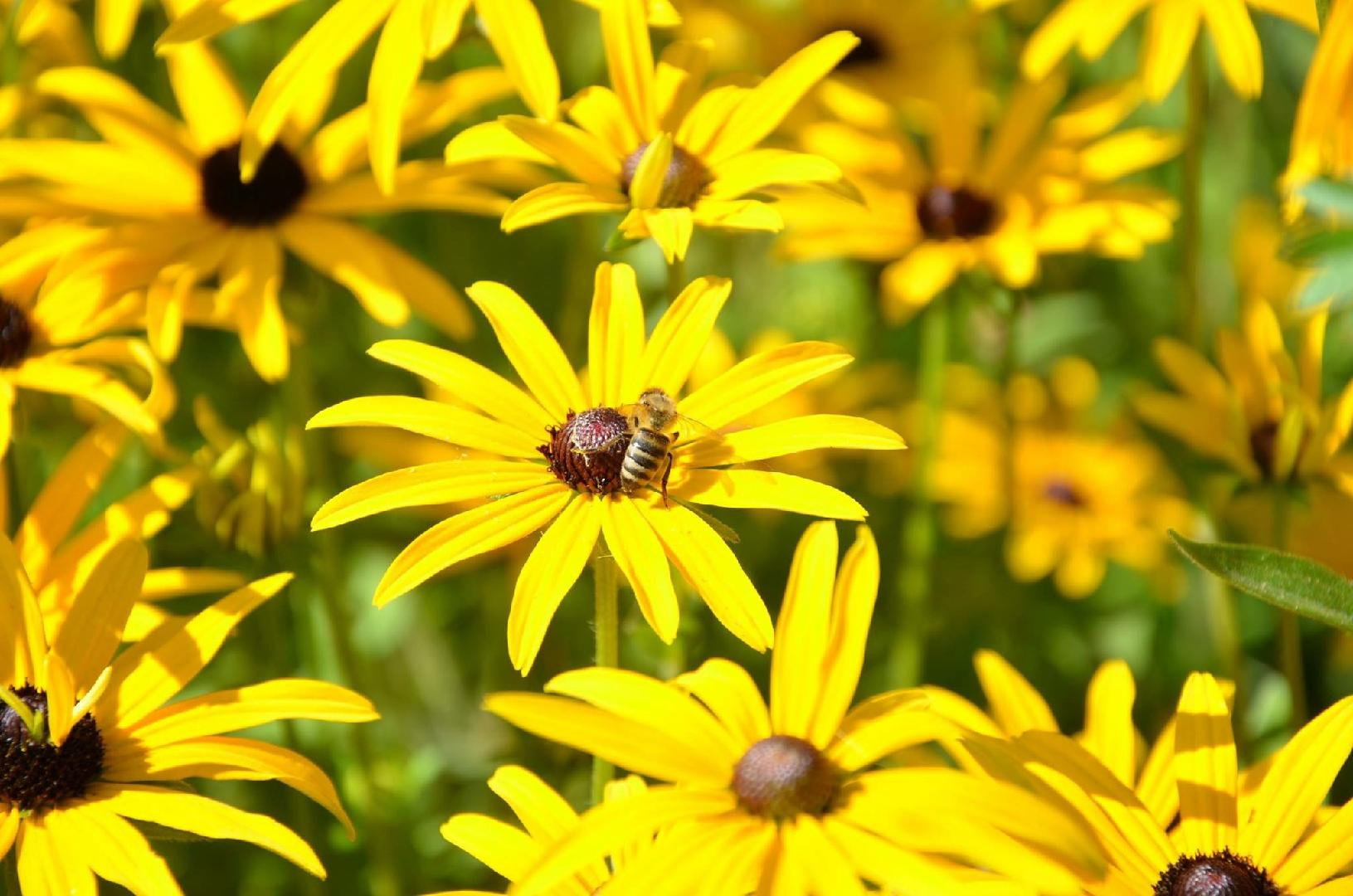 12 Flowers That Are Good For Bees