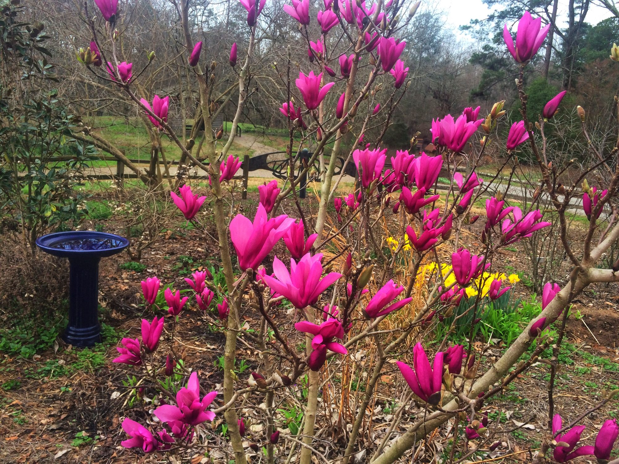 What You Need To Know About The Jane Magnolia Southern Living