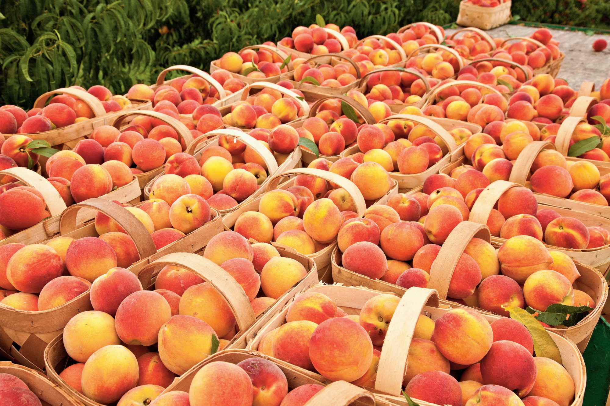 This Is The Very Best Way To Freeze Peaches Southern Living,Wheat Pennies Value Chart