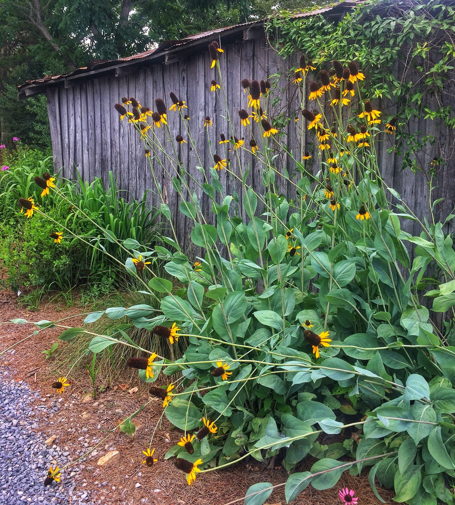 Growing Wild In Tennessee Southern Living