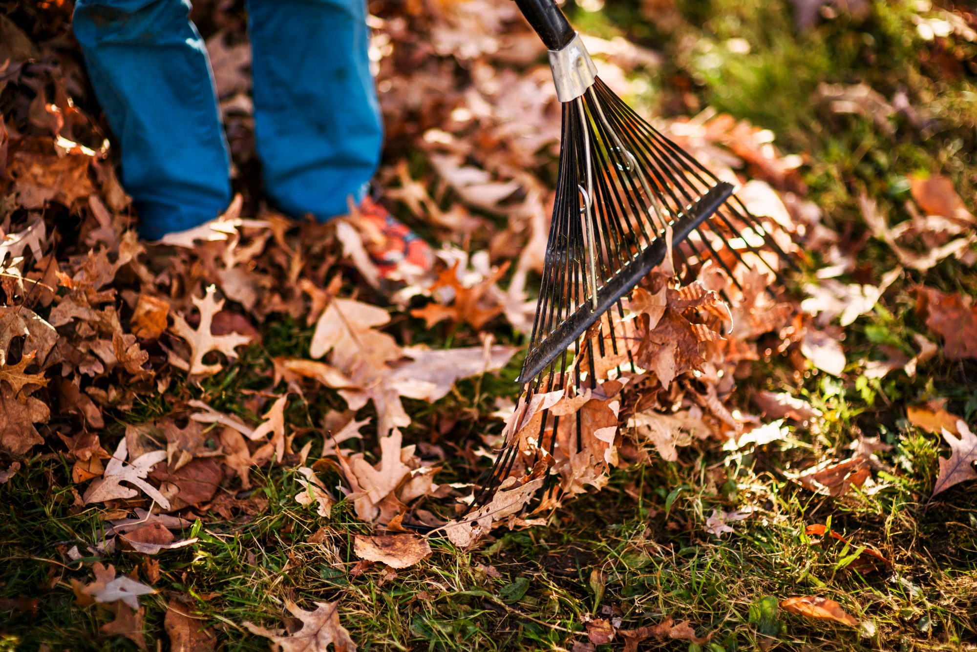 Does Raking Leaves Make You A Bad Person?   Southern Living