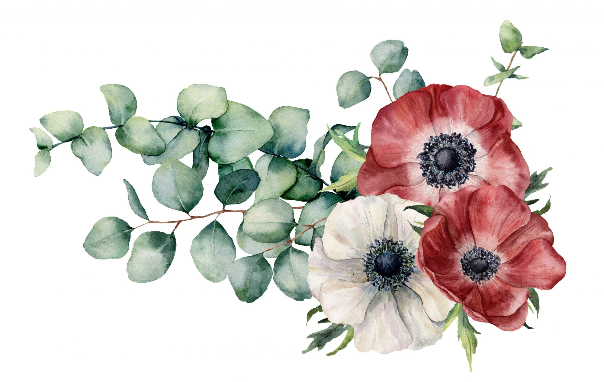 Ananomie Videos 10 facts about anemone flower all gardeners should know