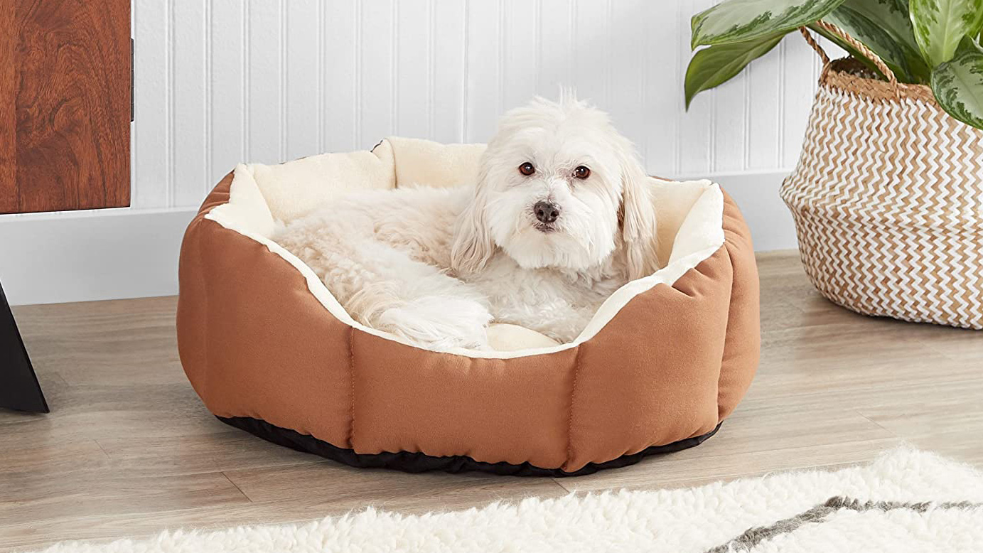 The 10 Best Dog Beds To Shop Now, According to Thousands of Reviews   Southern Living