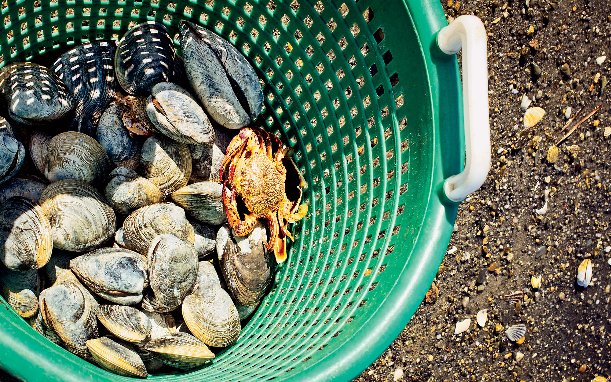 Where to Go Clamming | Travel + Leisure
