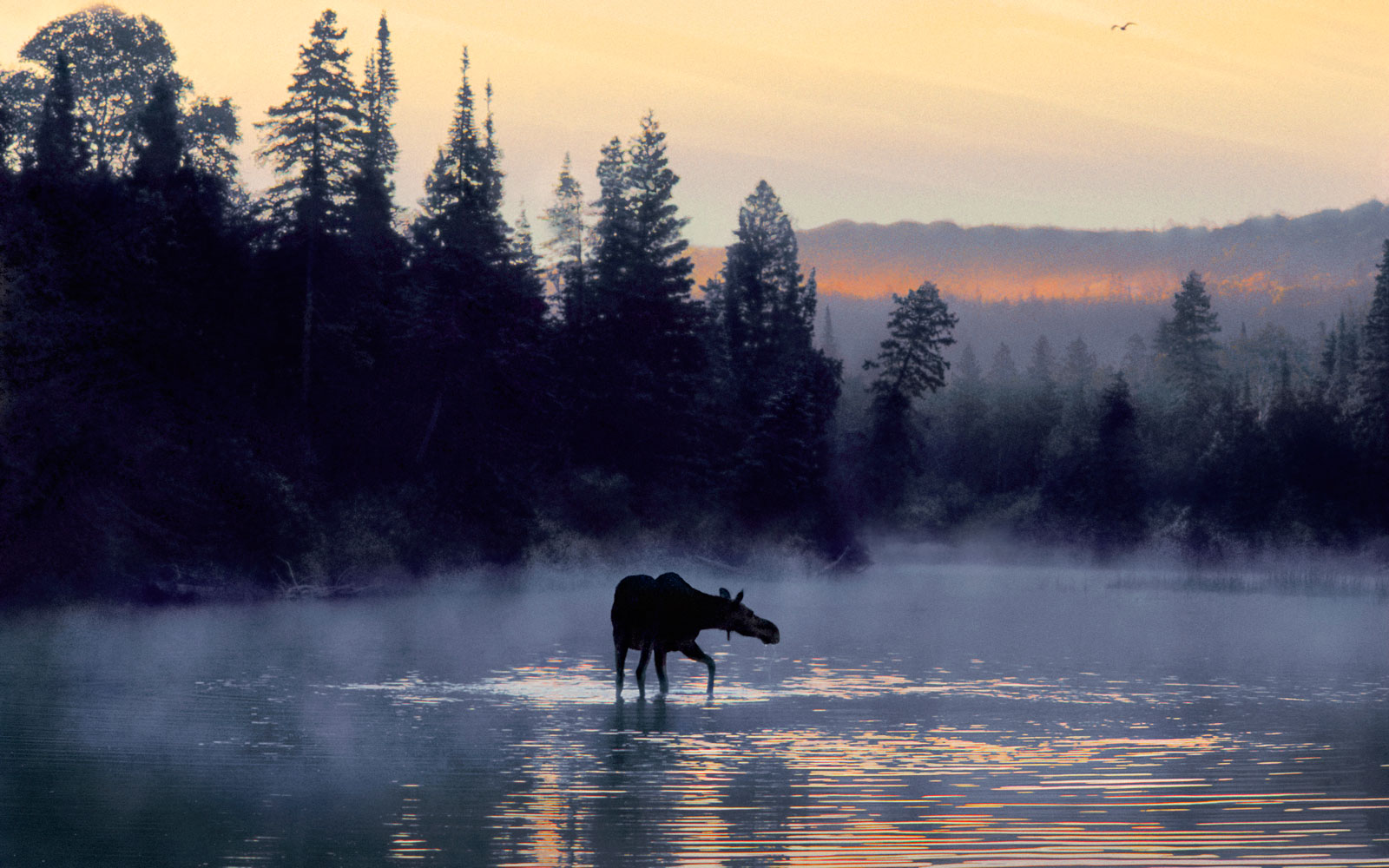A Guide to Isle Royale National Park   Travel + Leisure
