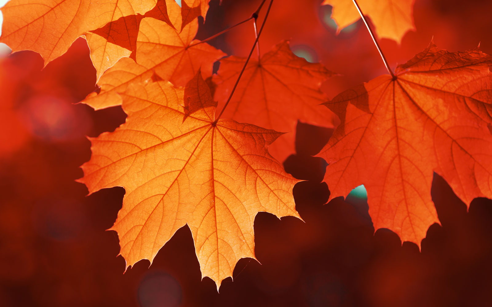This Company Will Give You 1 For Every Fall Leaf You Send Them Travel Leisure