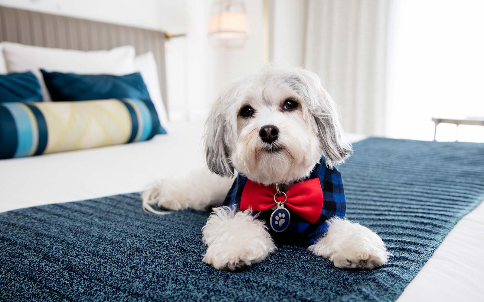 This Hotel Offers Puppy Cuddles On Demand Travel Leisure