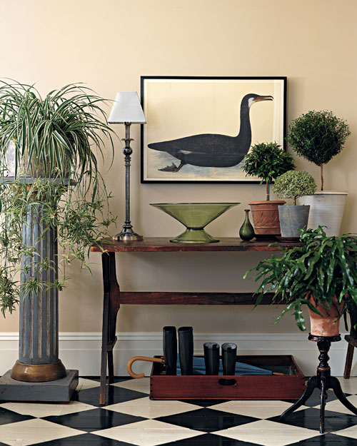 Everything You Need to Know About Houseplants