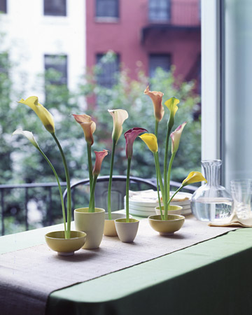 http://www.marthastewart.com/sites/files/marthastewart.com/images/content/pub/ms_living/2005Q1/a101025_0305_callas_xl.jpg