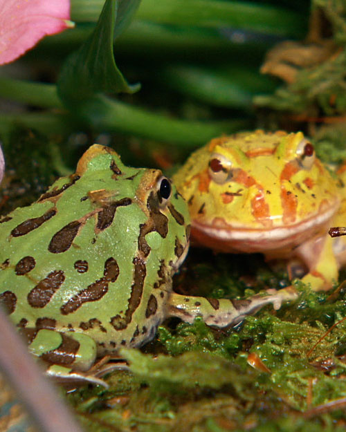 Caring for Amphibians