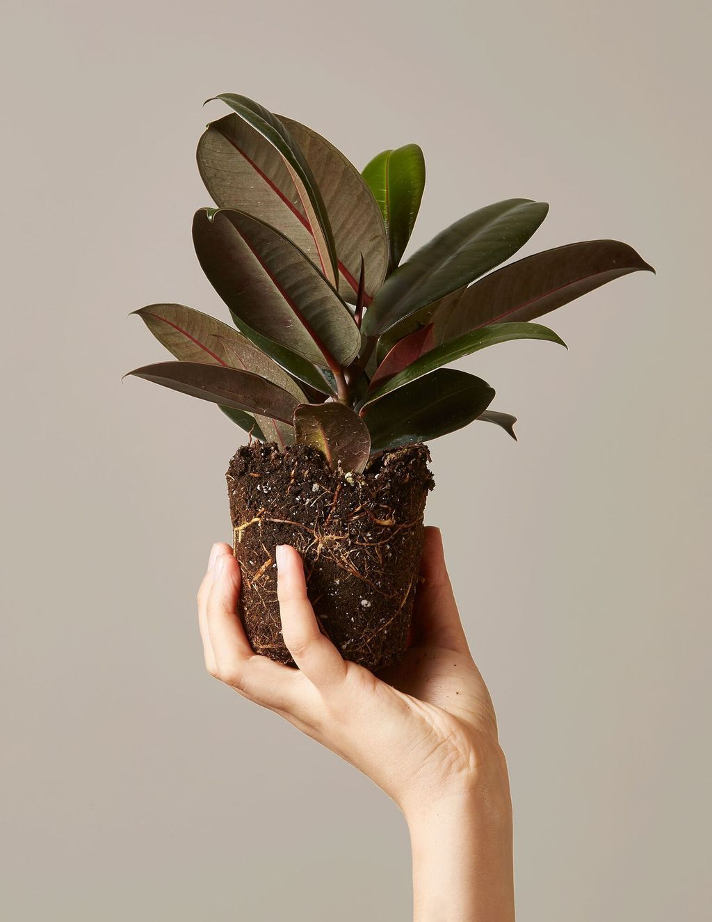 Eight Tips for Safely Transporting Your Houseplants During a Move