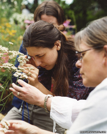 Guide to Herbalism Education