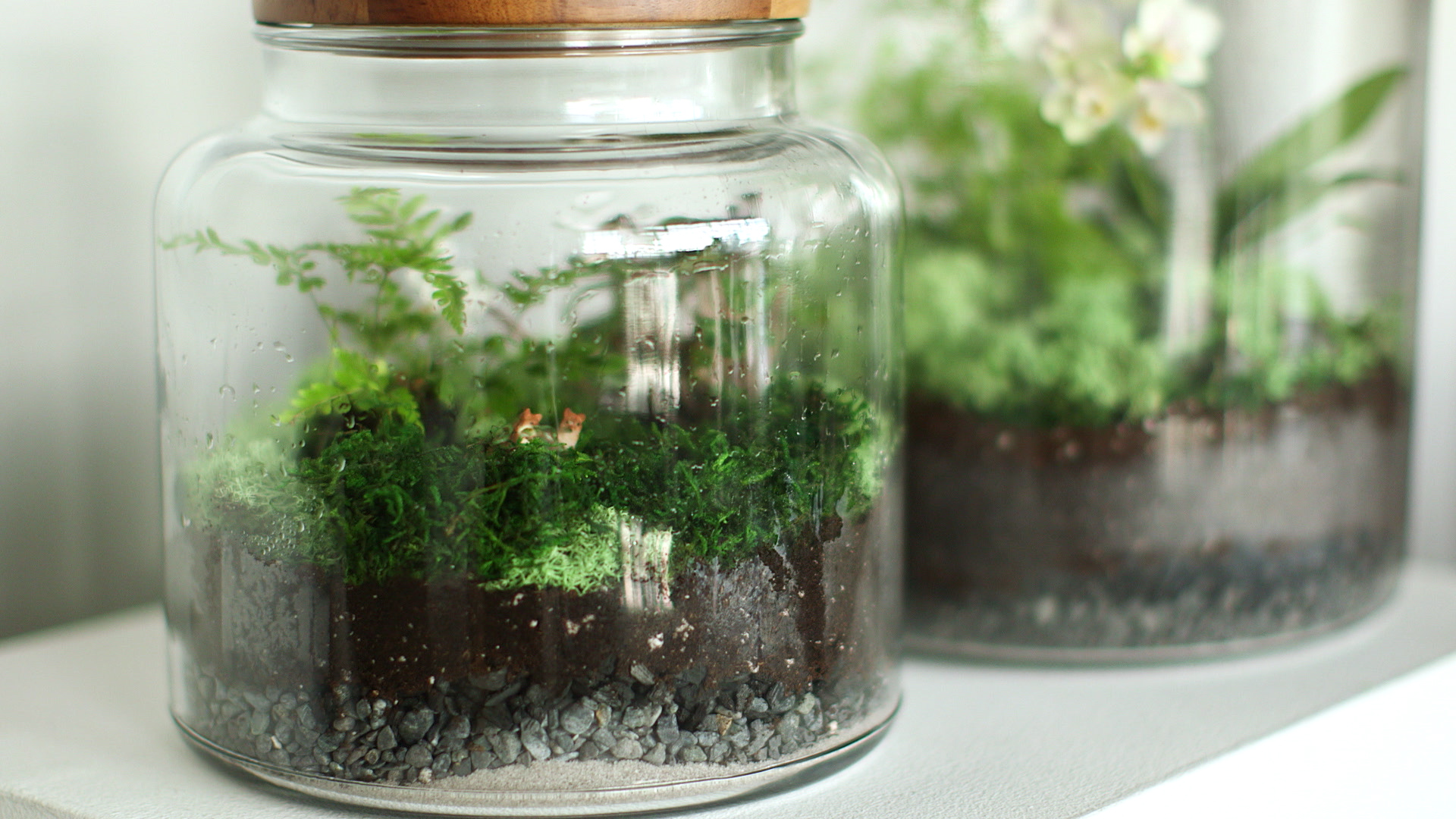 How To Make The Perfect Terrarium And Keep It Alive Martha