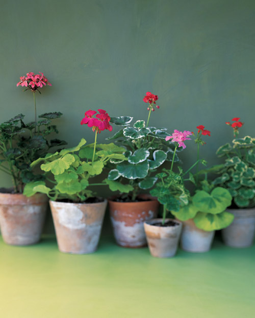 Protecting Your Plants From Your Pets