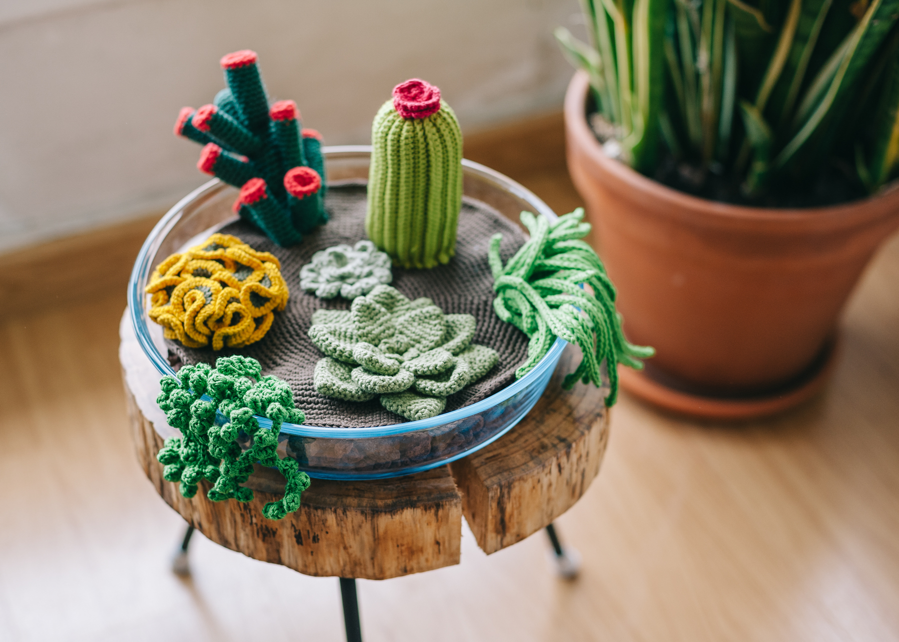 How To Crochet A Terrarium Including 7 Different Succulents Martha Stewart