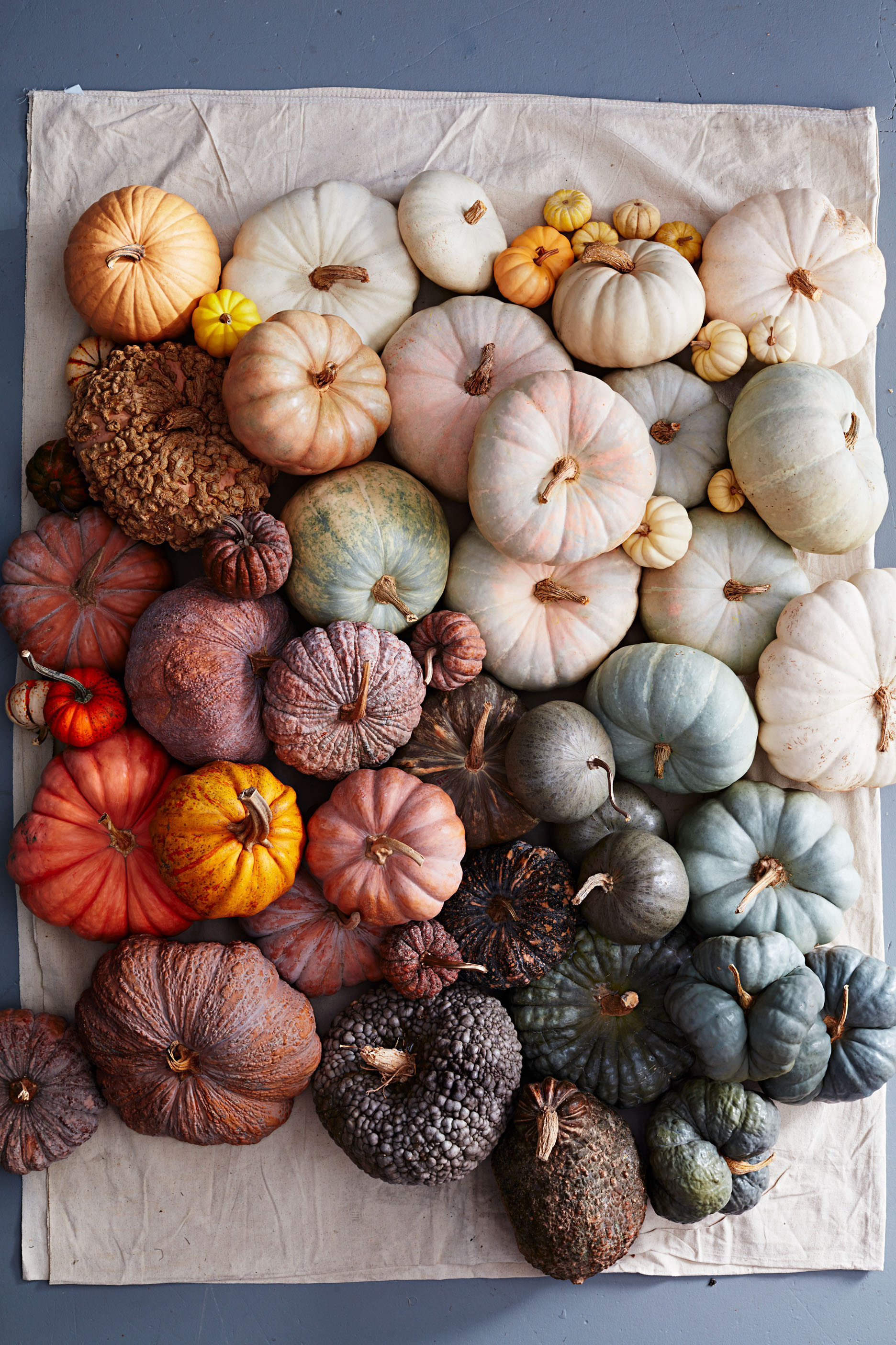5 Tips for Picking a Pumpkin That Will Last Through October