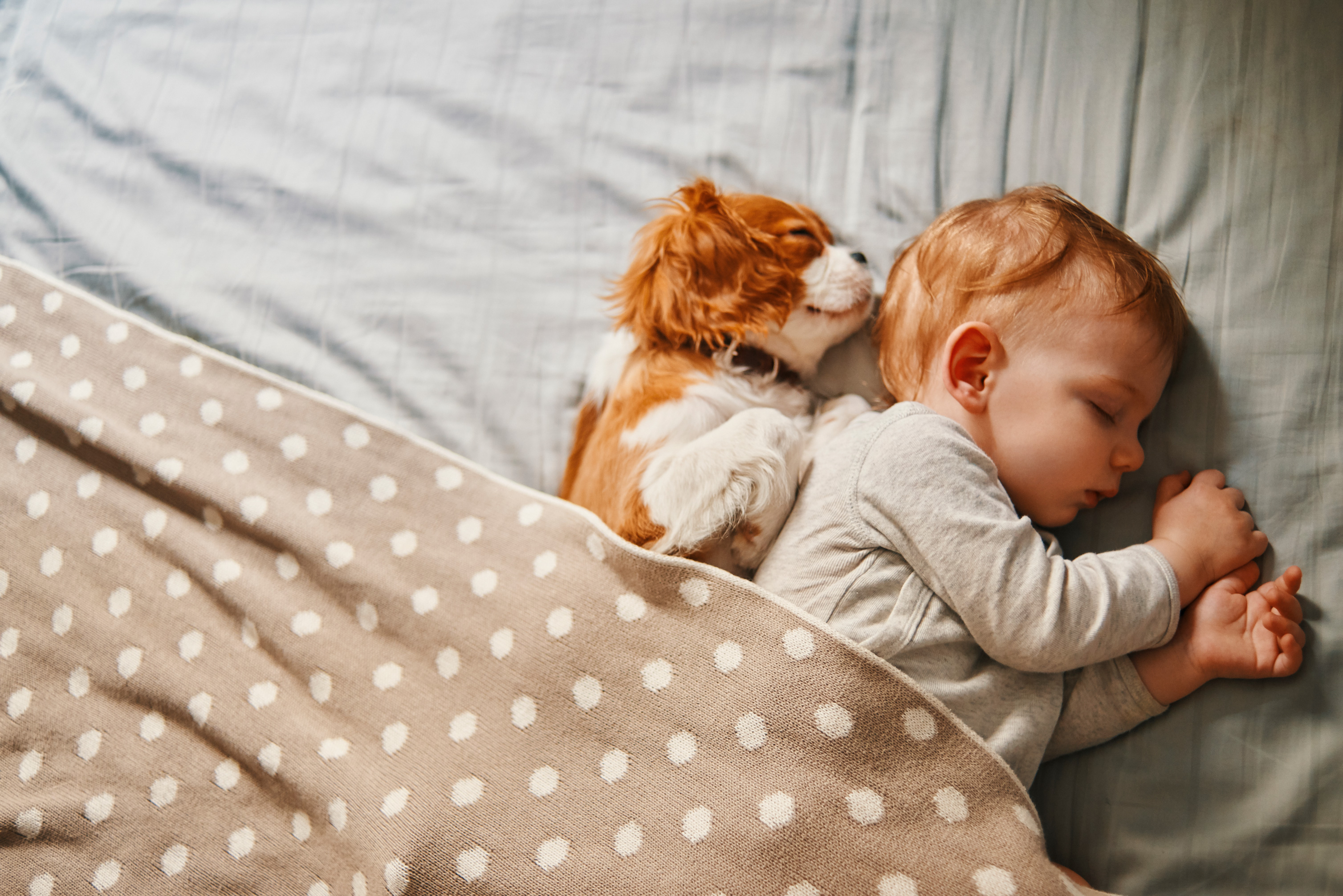 Prep Your Pet Introducing Your New Baby To Your Fur Baby Martha Stewart
