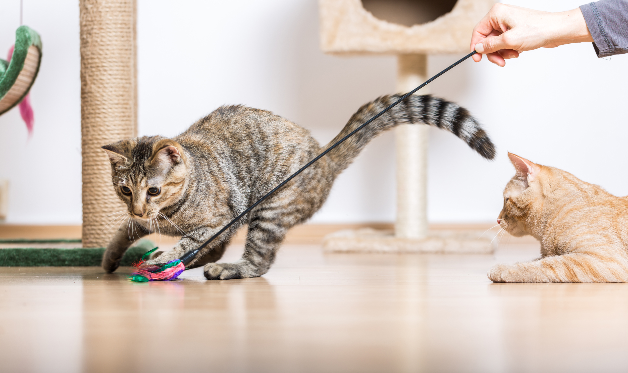 5 Signs Your Cat Needs More Playtime Martha Stewart