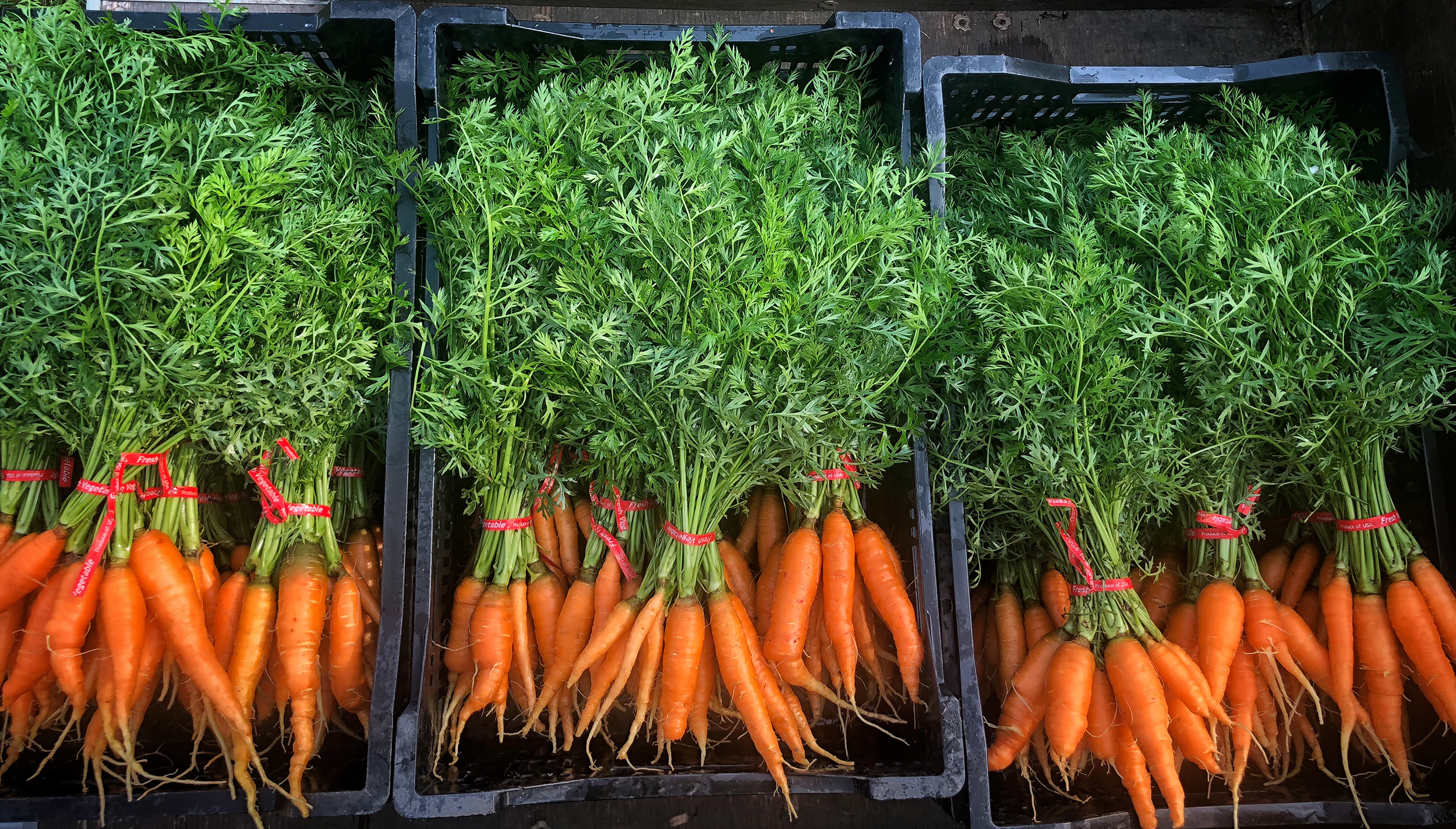The First Carrots and Taking Care of the Land