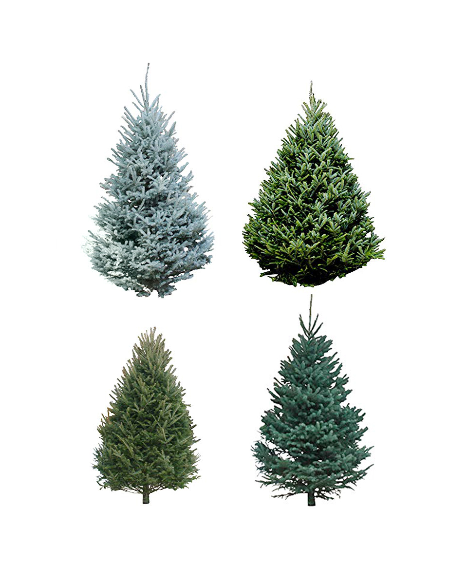 Christmas Tree Types.Amazon Will Deliver A Live Christmas Tree To Your Doorstep
