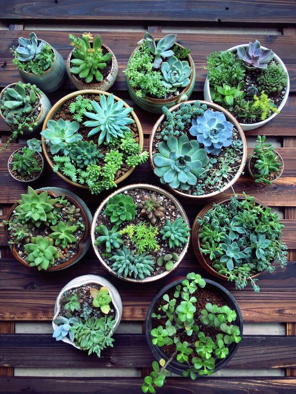 How To Care For Outdoor Succulents Martha Stewart