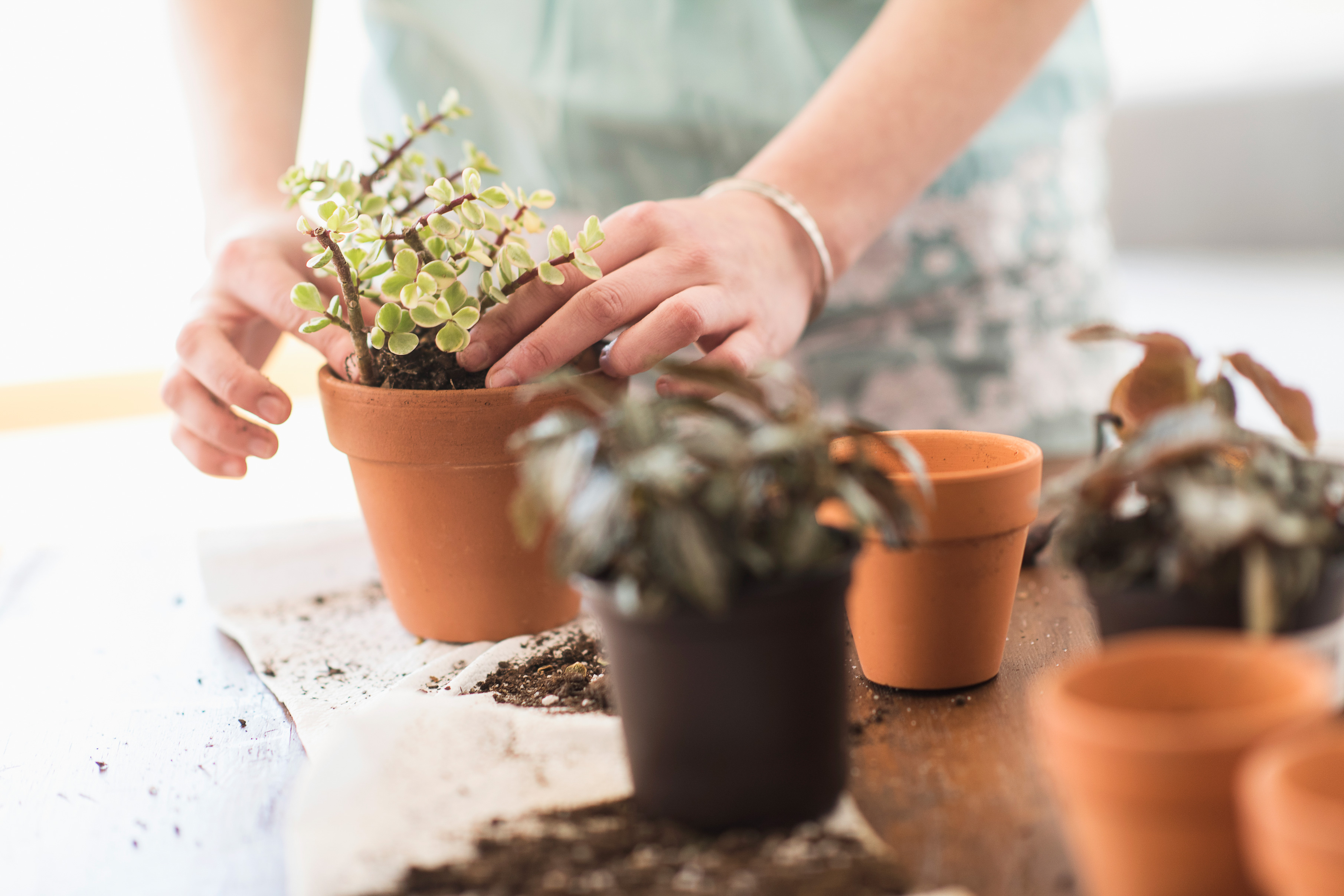 How Often Should You Change the Soil in Your Houseplants?