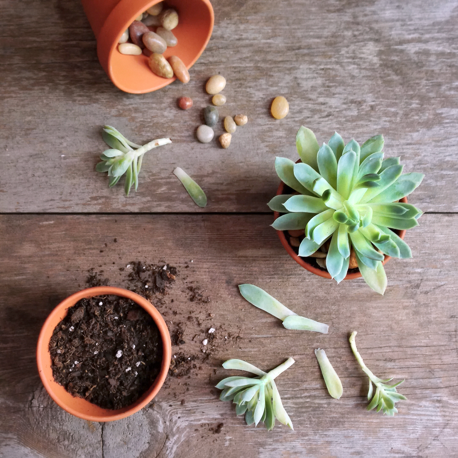 How To Use Rooting Hormone When Propagating Plants Martha Stewart