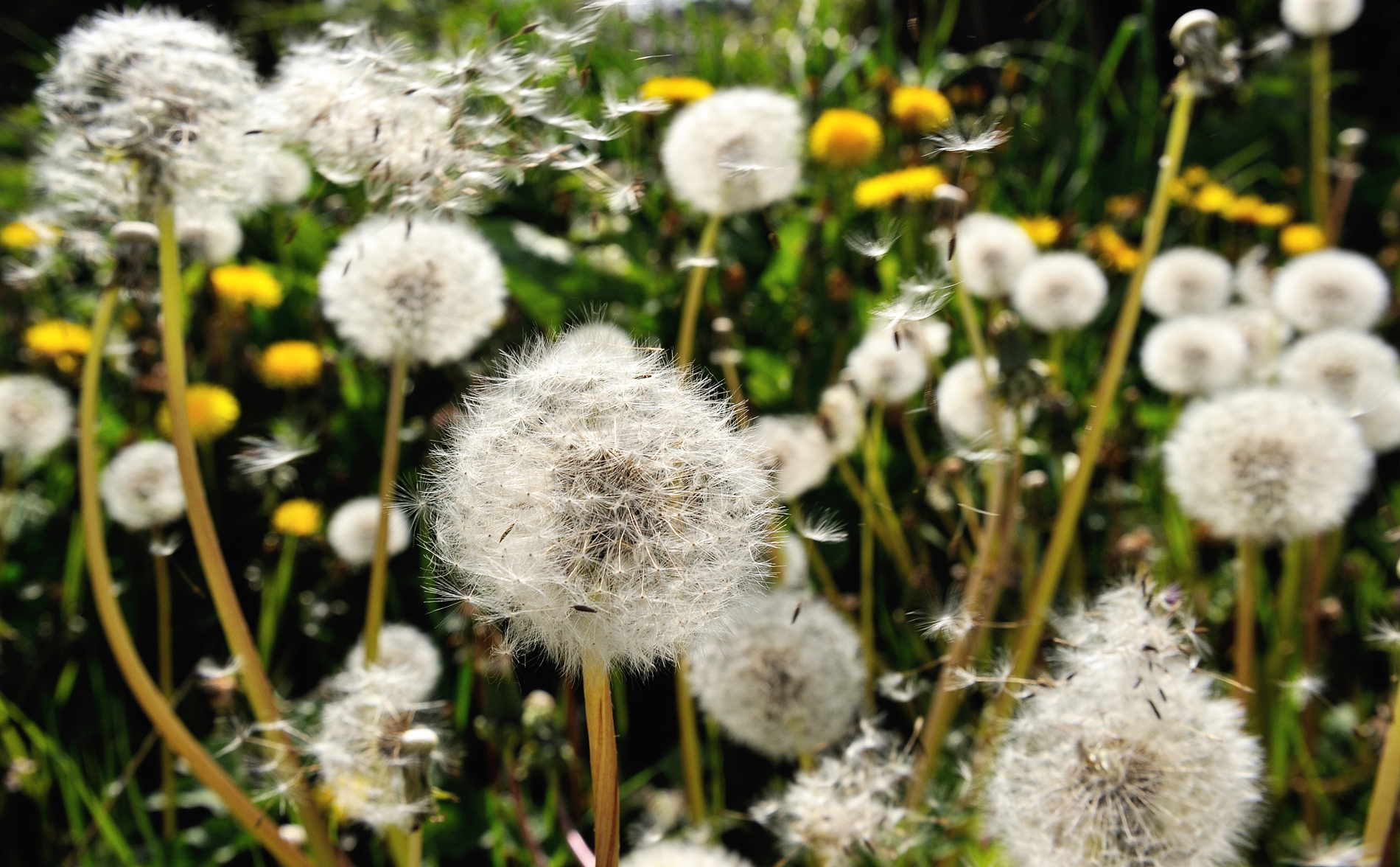 How to Get Rid of Even the Worst Backyard Weeds