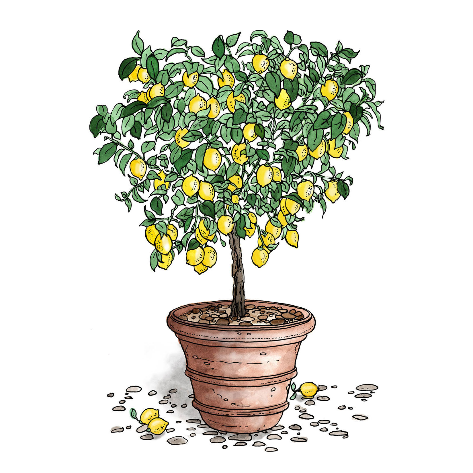 illustration of a lemon tree