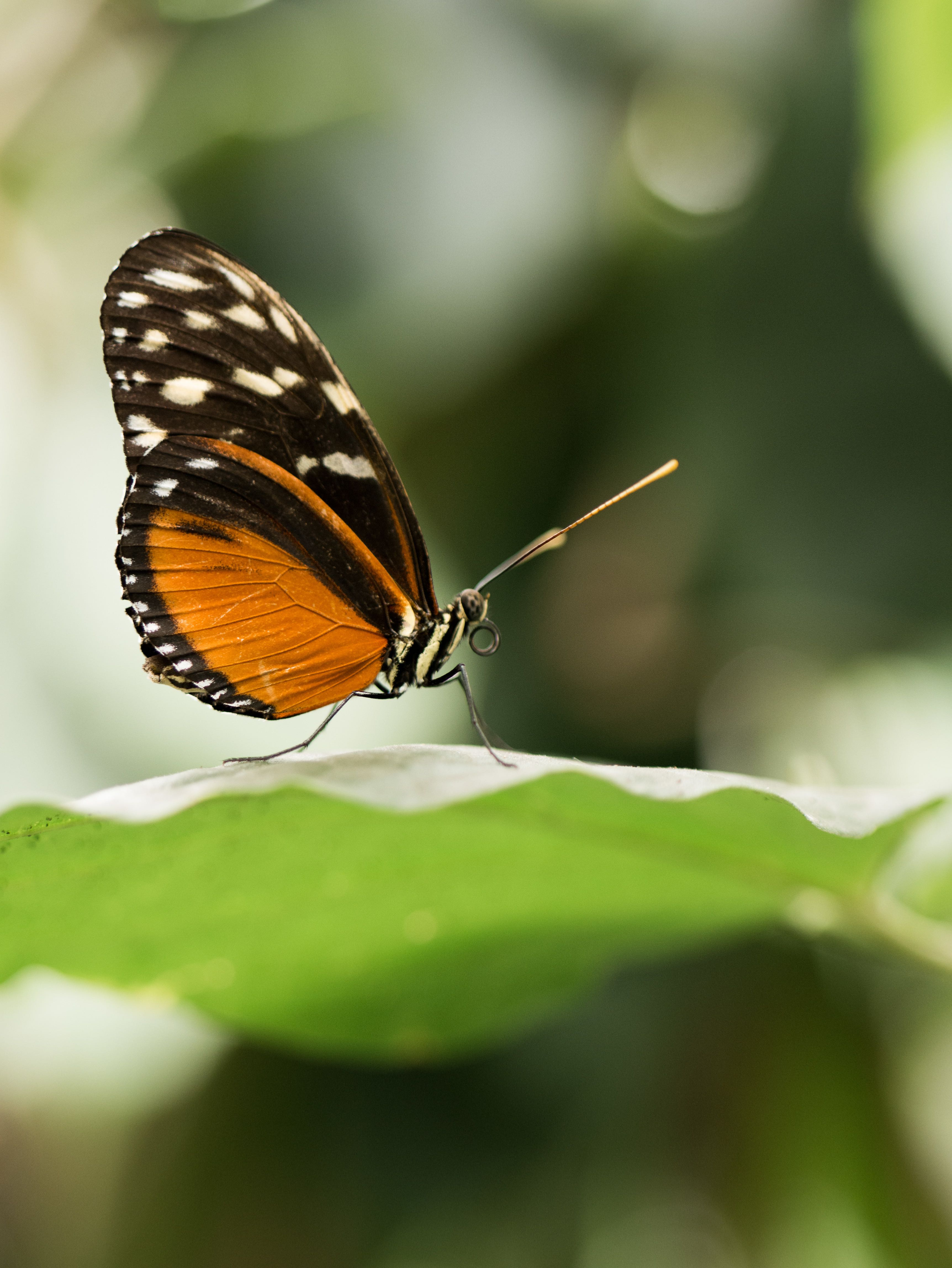New Research Explains Why the Butterfly Population Is Declining—and How to Possibly Reverse It