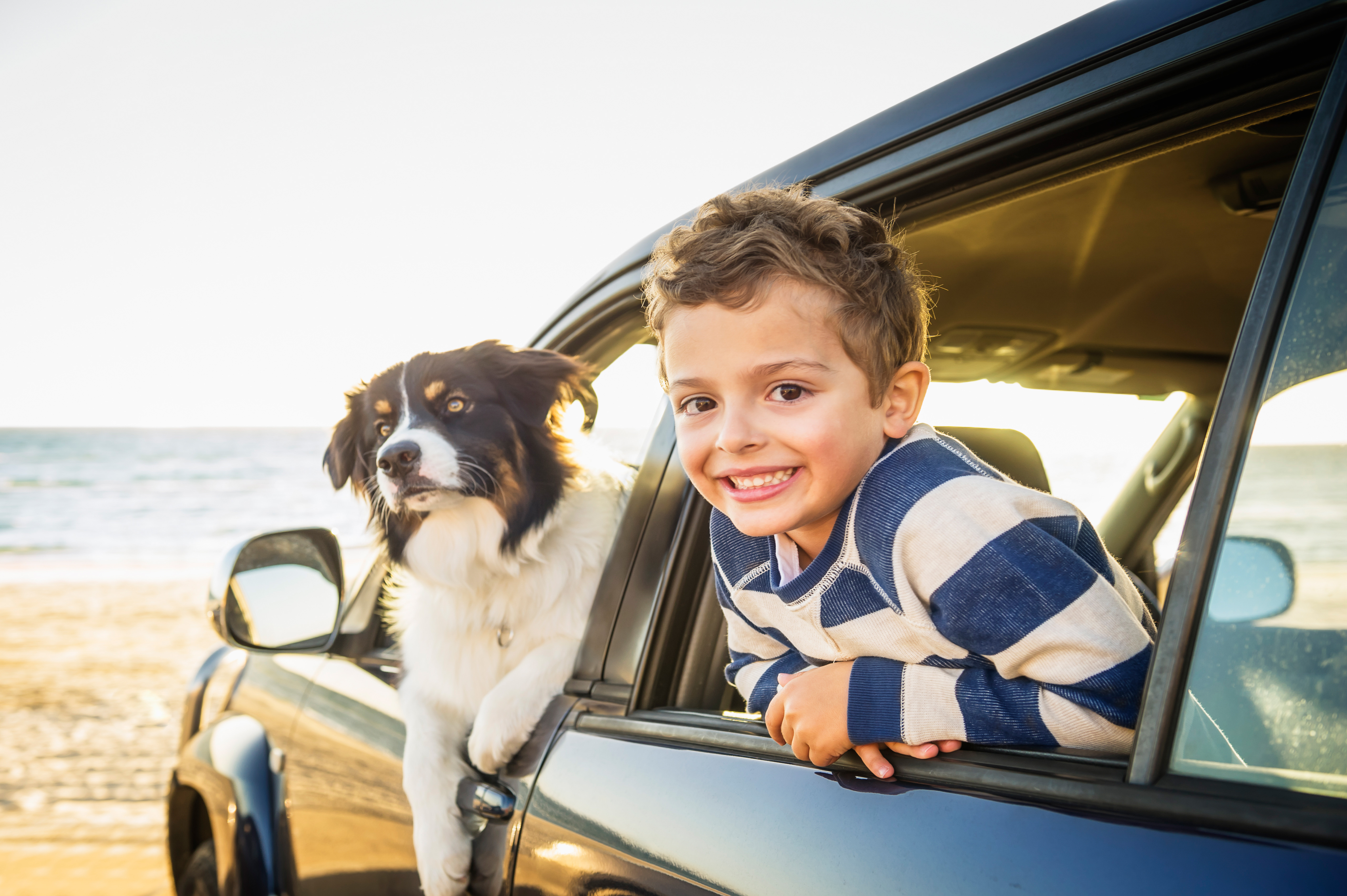How to Get the Pet Smell Out of Your Car