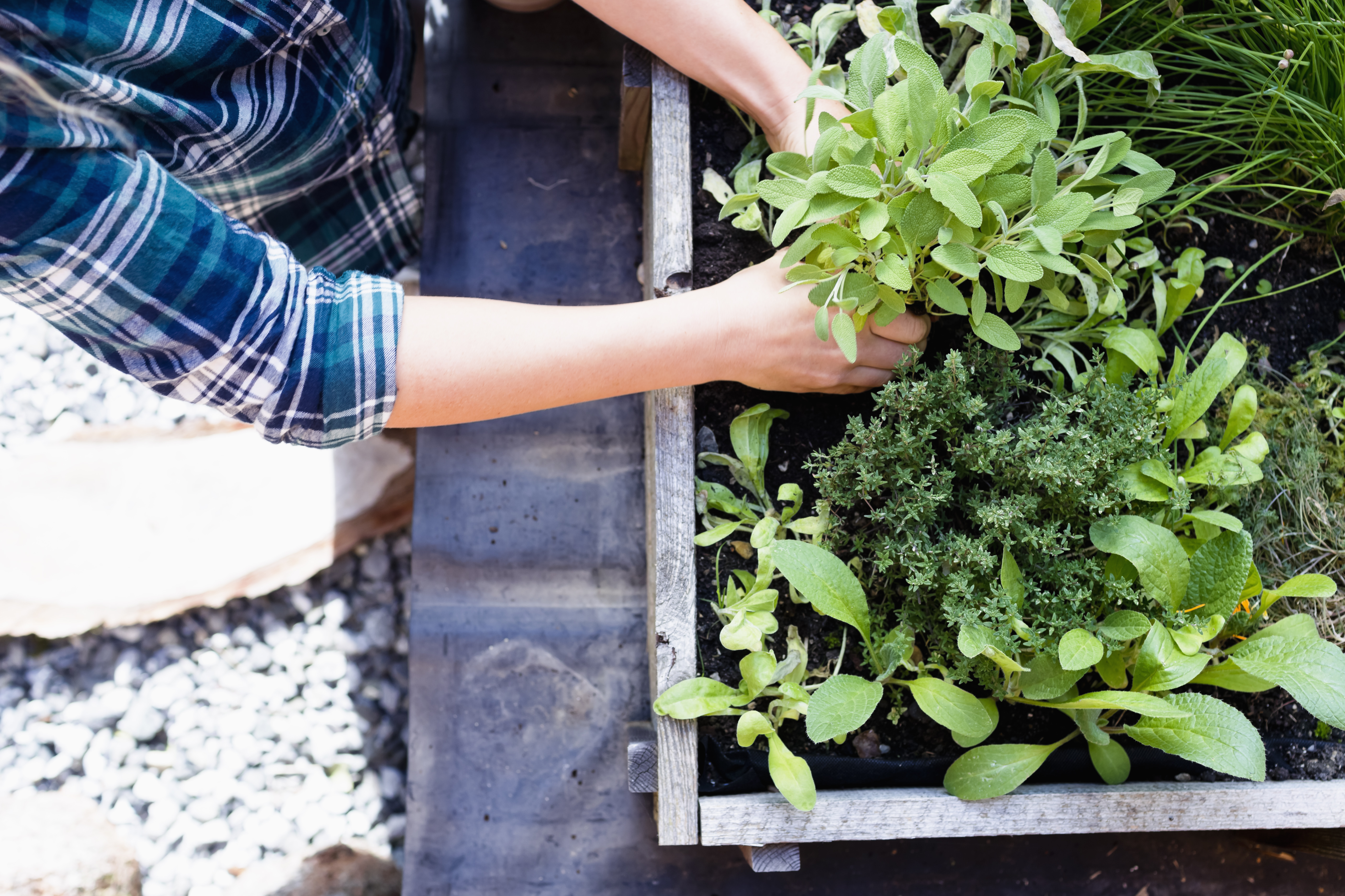 Pest-Repelling Plants Every Home Gardener Should Know About