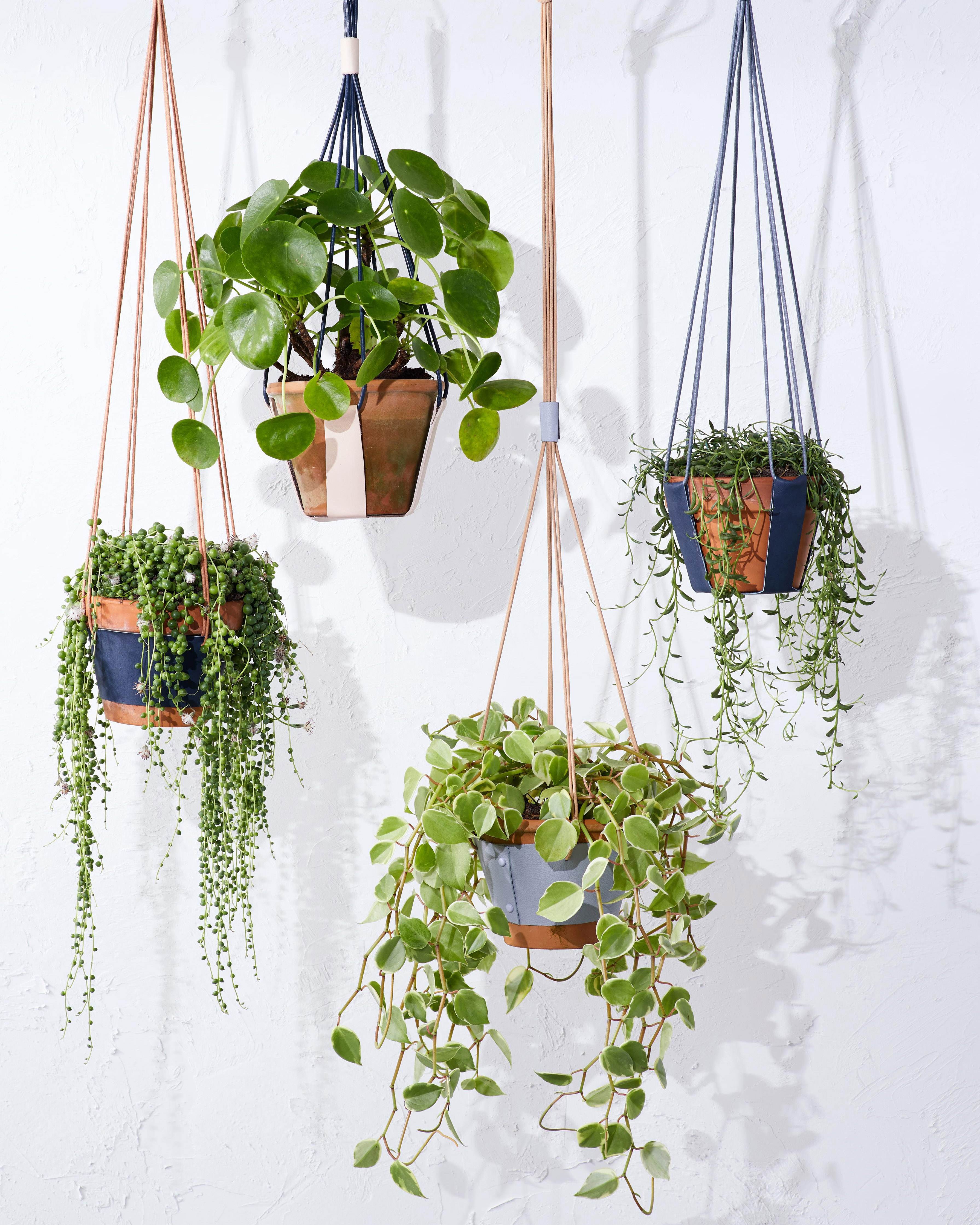 Upgrade Your Potted Plants With These Diy Leather Hangers Martha Stewart