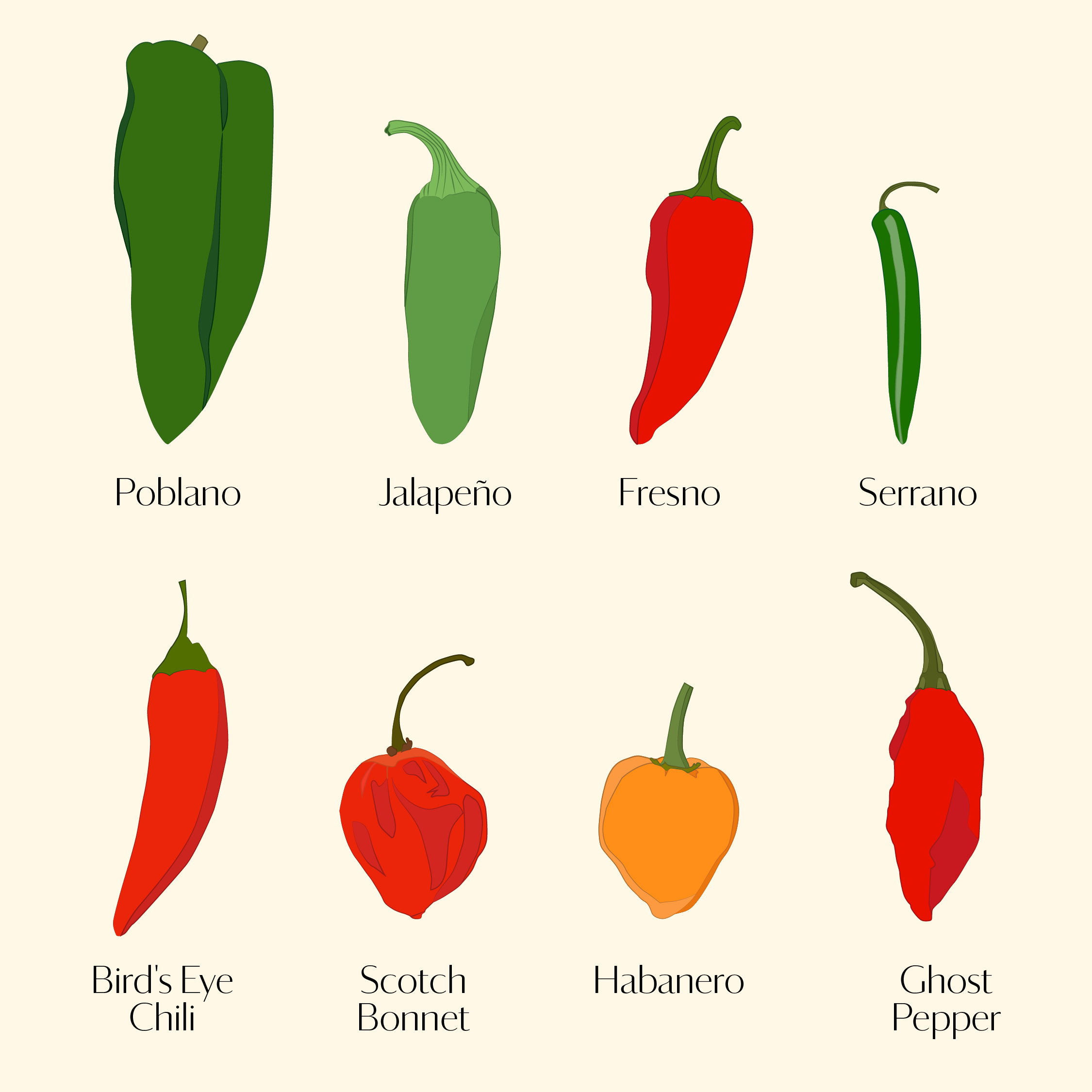 Your Ultimate Guide To Chile Peppers From Mild To Spicy Martha Stewart