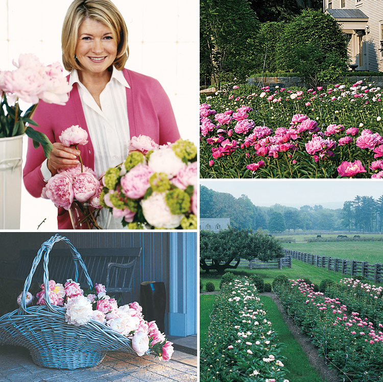 All About Martha's Peony Garden