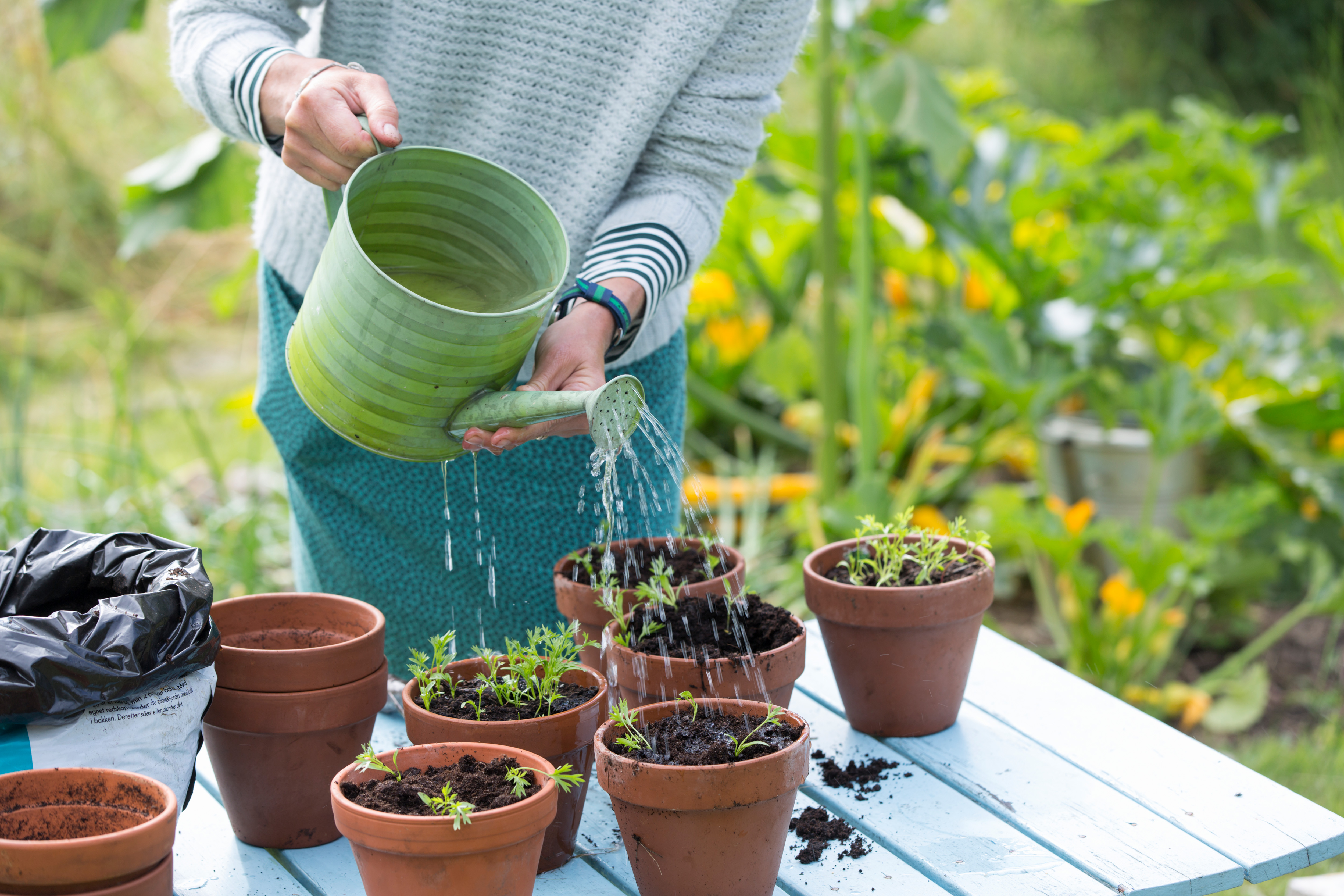 The Beginner's Guide to Propagating Plants