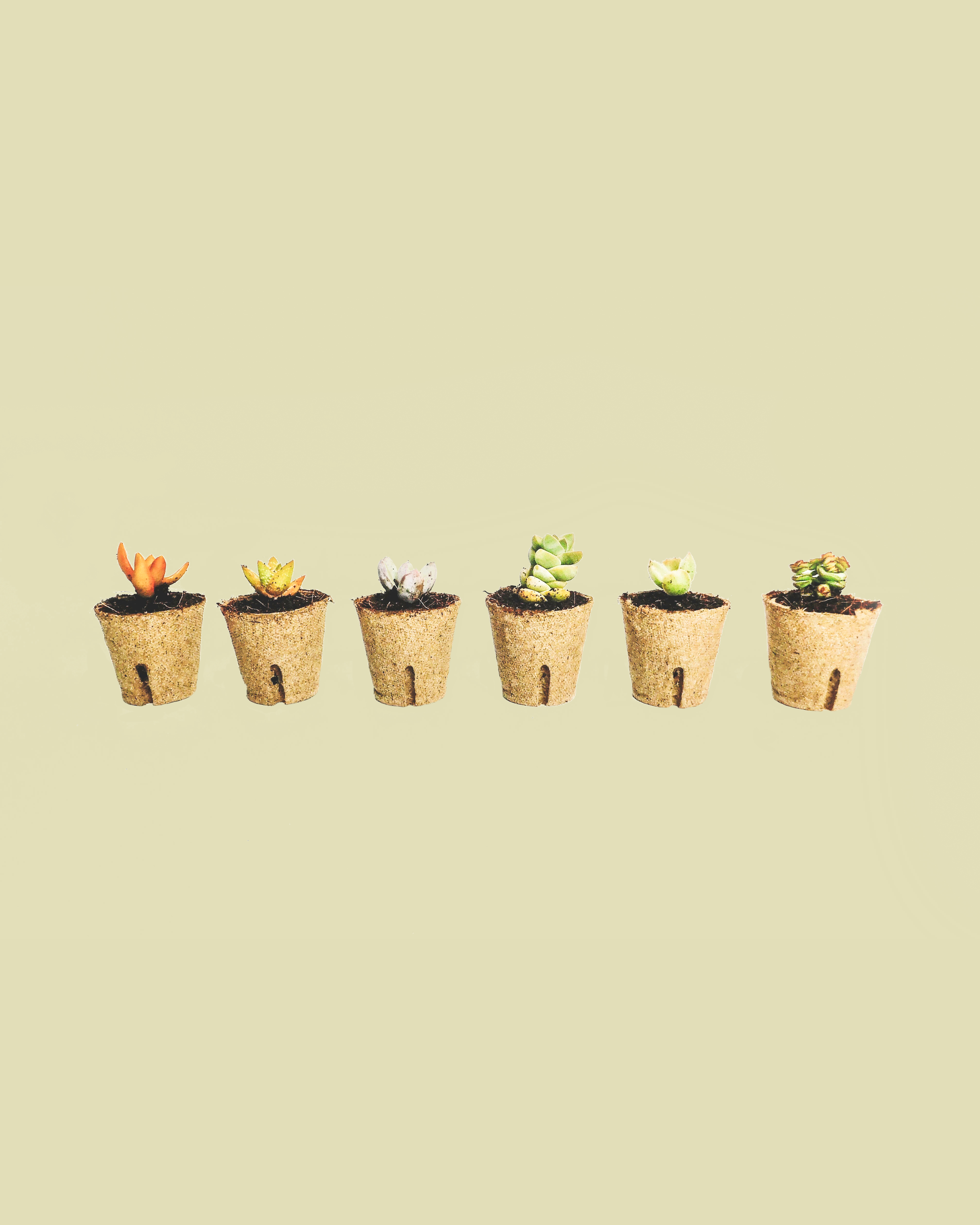 a row of succulents