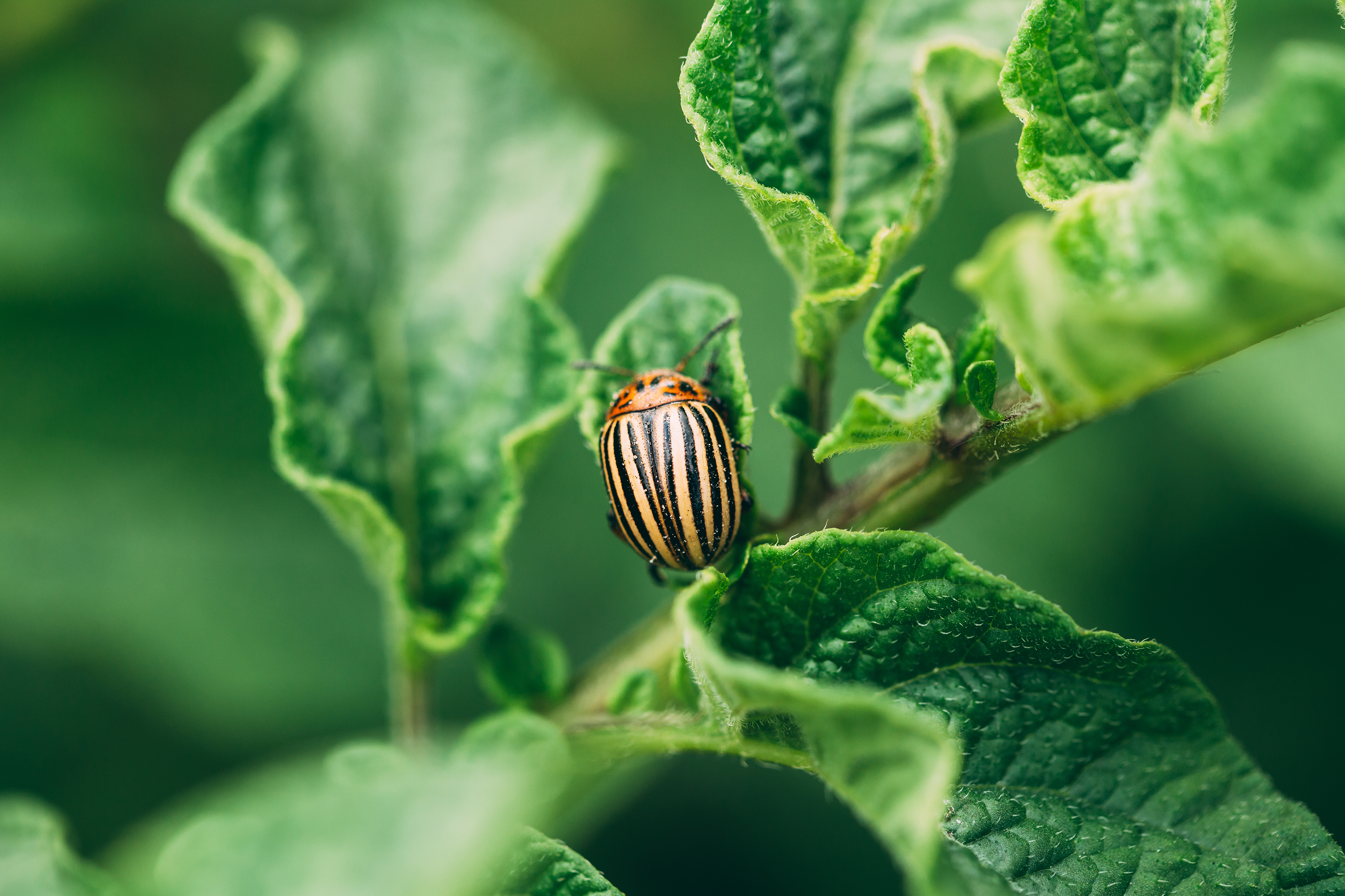 How To Rid Your Garden Of Five Common Summertime Pests Martha Stewart
