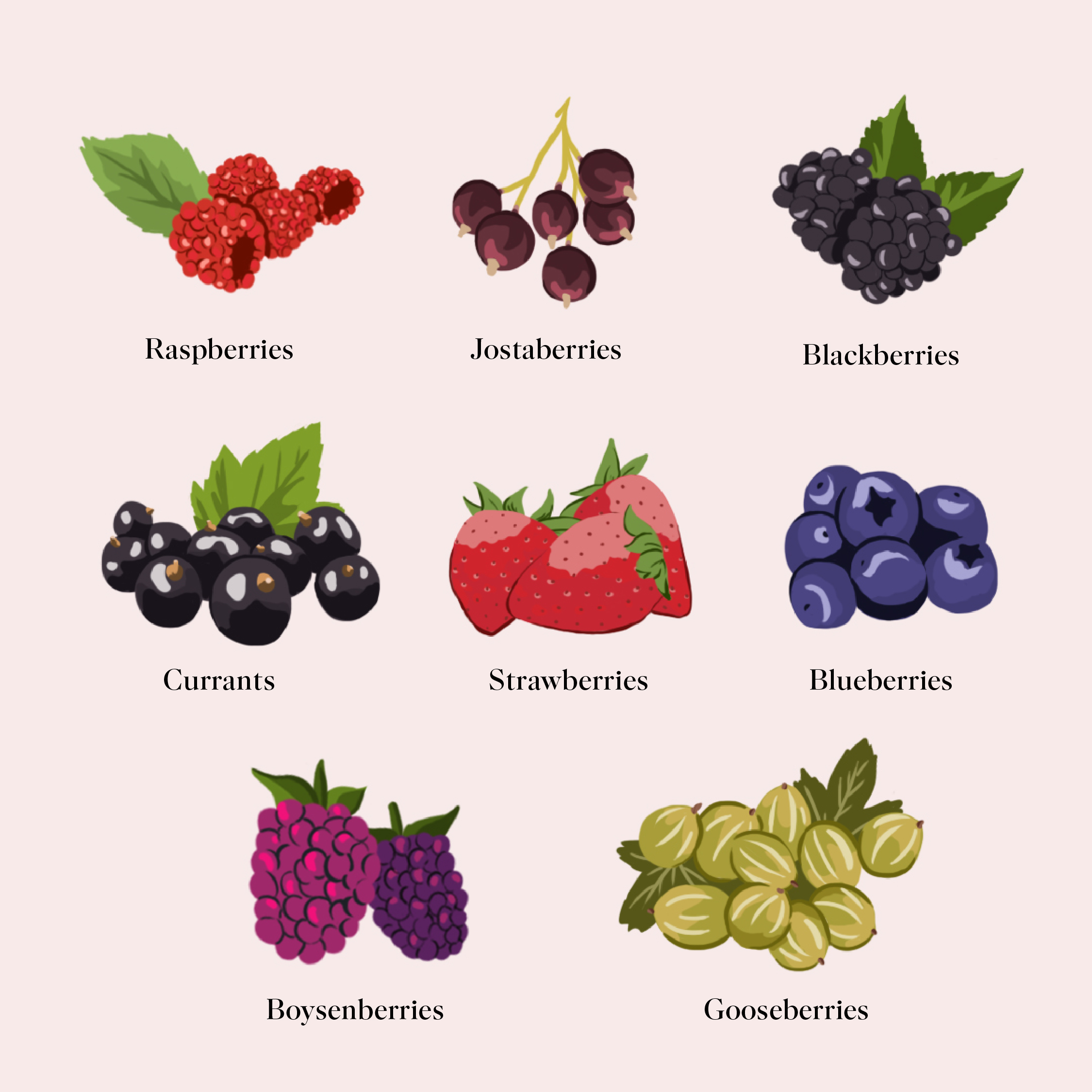Your Guide to Successful Summer Berry Picking