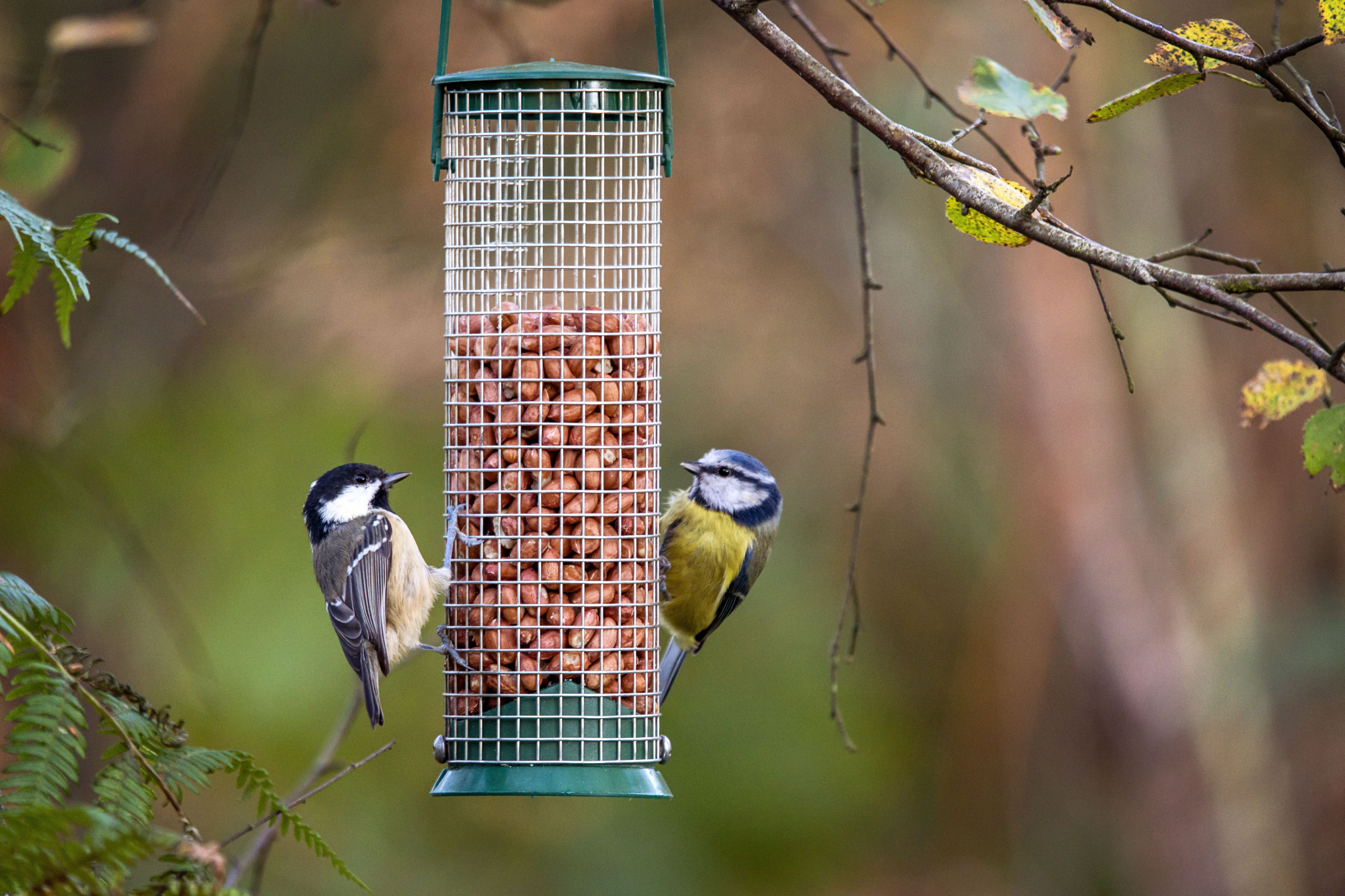 The Best Bird Feeders for Your Backyard