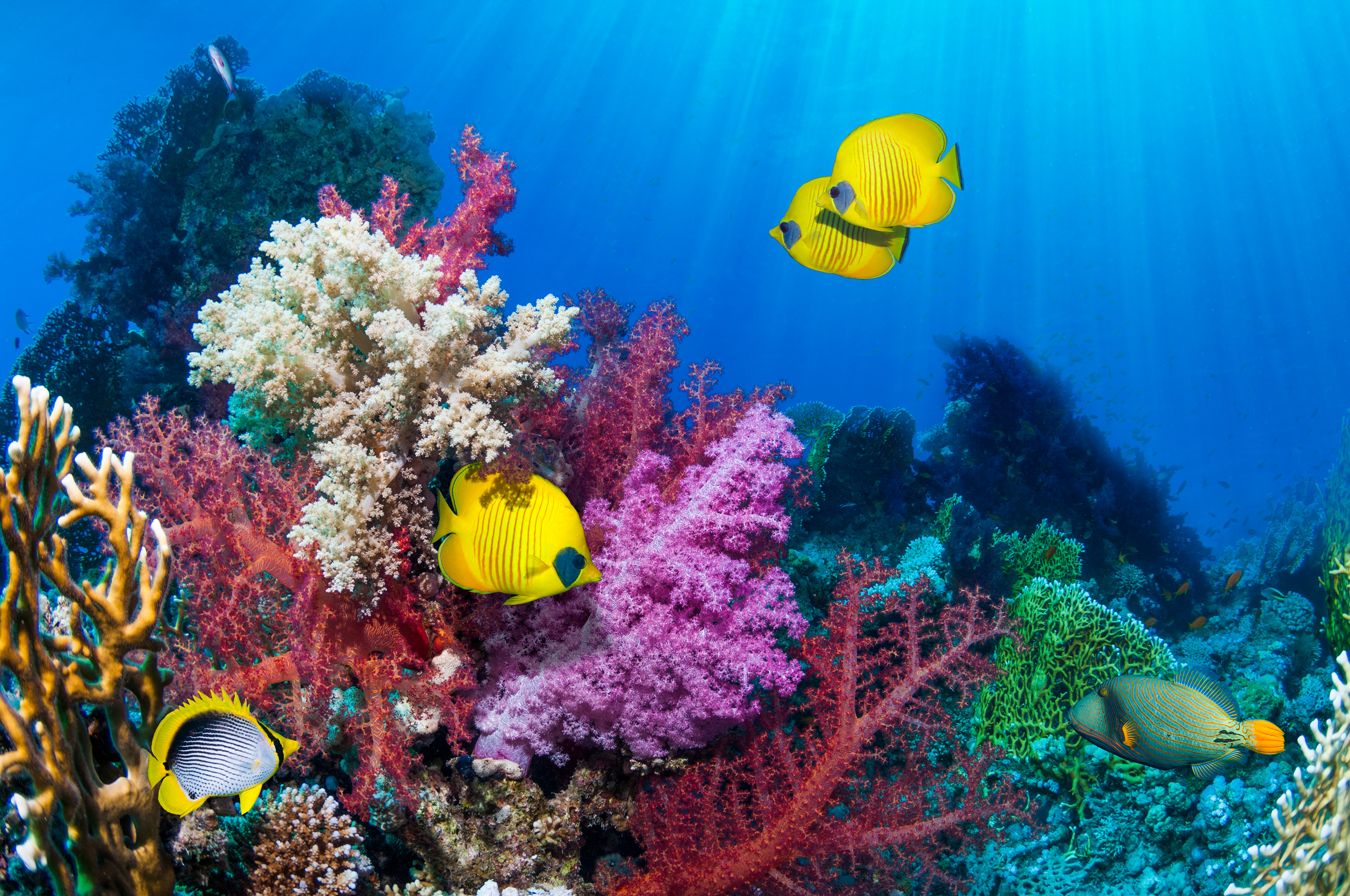 Scientists Say Coral Reefs Are Moving Away from Tropical Waters Due to Climate Change