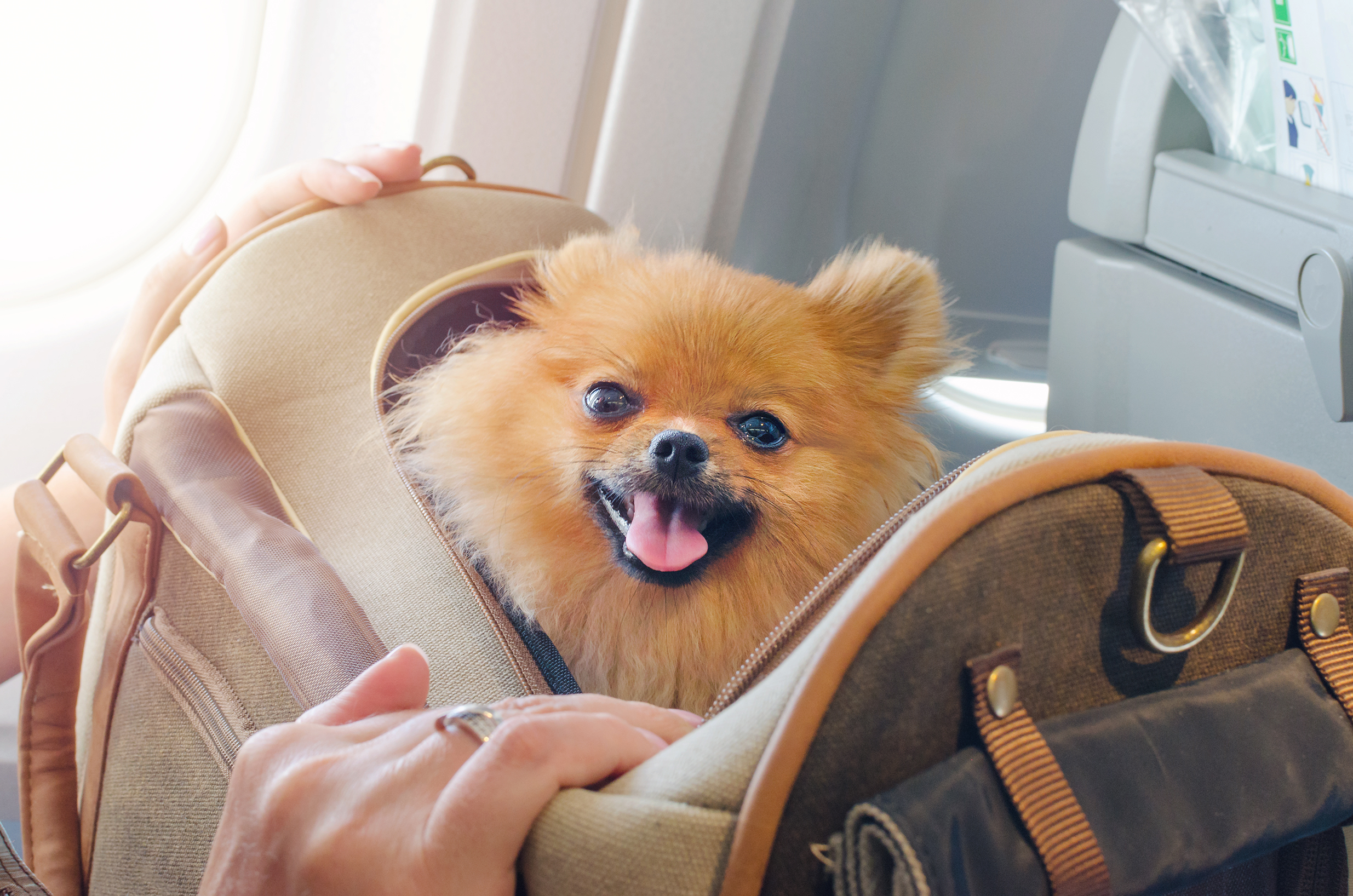 Flying on a Plane with Your Pet? Here's What You Should Know