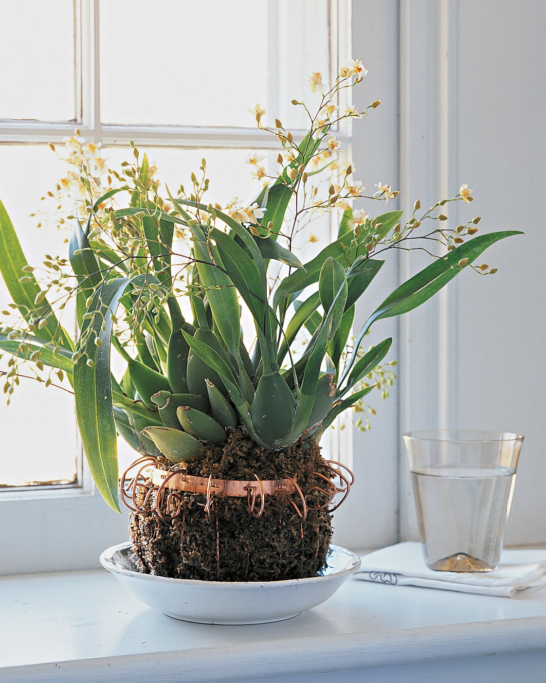 Five Mistakes You're Making with Your Orchid