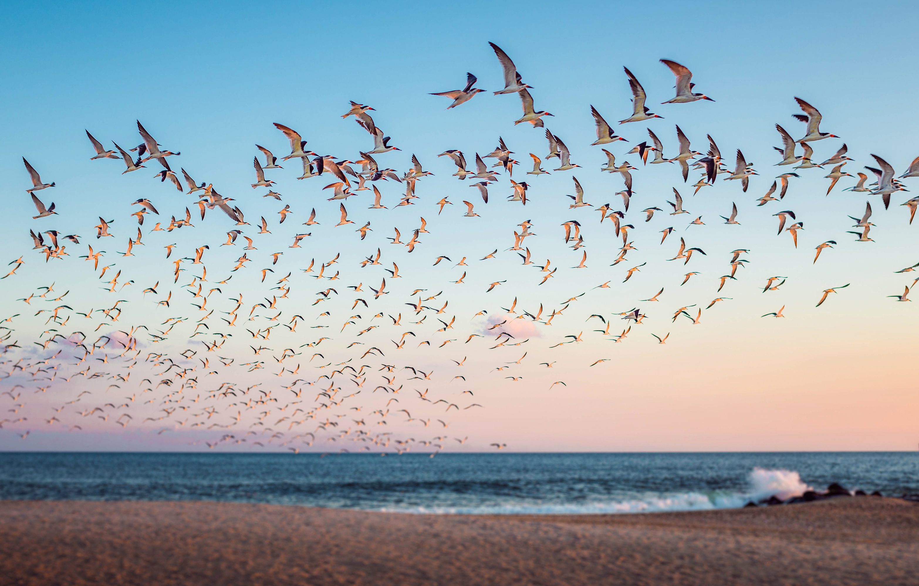 The Best Places for Birdwatching in the United States